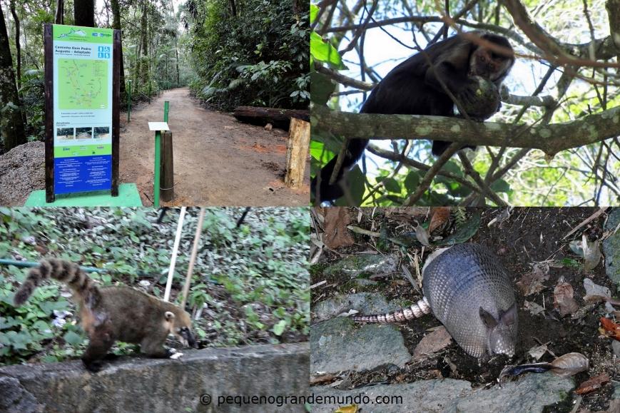 Trilha e animais da Floresta da Tijuca
