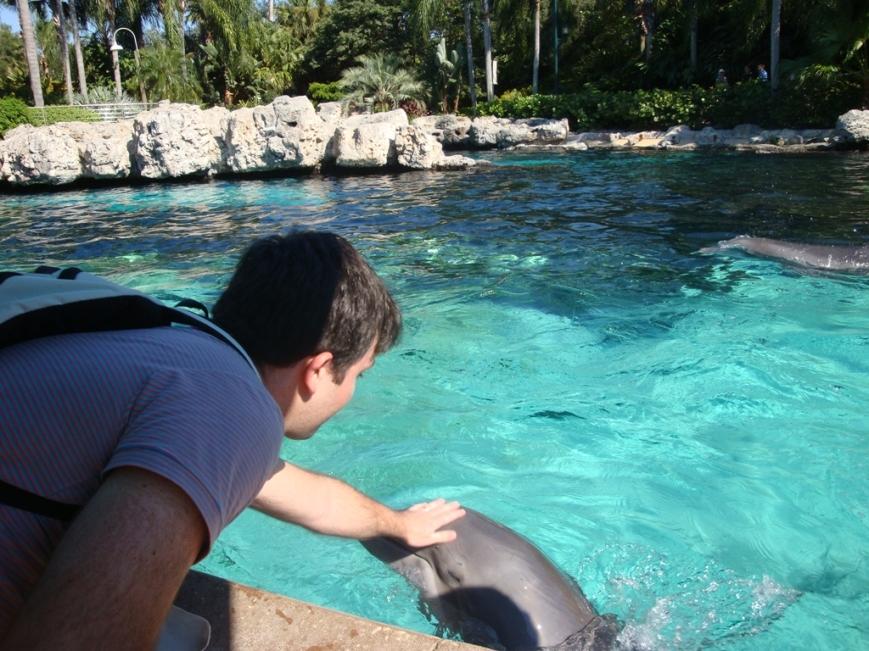 Alimentando golfinhos