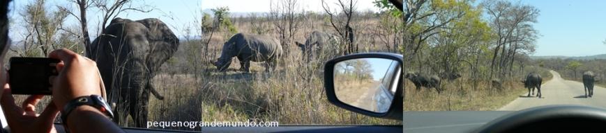 """Chegar bem próximo e em segurança de 3 dos """"Big 5"""" (elefante, rinoceronte e búfalo). Fique o tempo que você quiser... Não troco o self drive por nenhum safari guiado! ;)"""