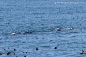 Baleias em Fish Hoek