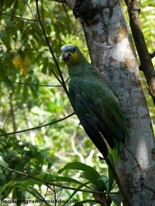 E o papagaio também se camufla muito bem