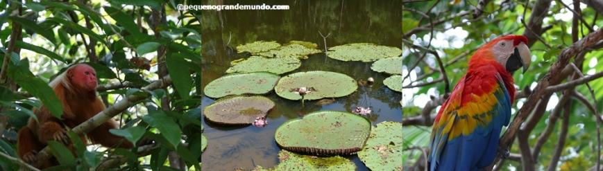 ecoturismo-Manaus