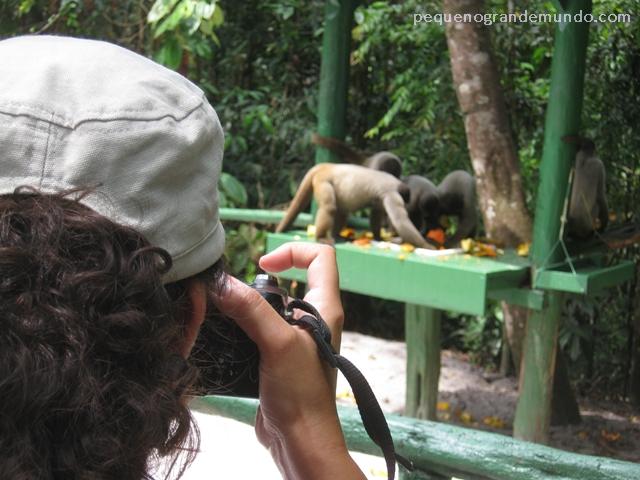 """Eu alucinada, na """"Floresta dos macacos"""", vendo e fotografando os macacos-barrigudos semi-provisionados (estão em liberdade mas recebem 1 """"refeição"""" diária até que aprendam a caçar)"""