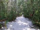 Caminho para as piscinas: imerso na floresta