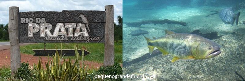 Entrada para o Rio da Prata, em Jardim - MS (56Km de Bonito) e peixe Dourado durante flutuação