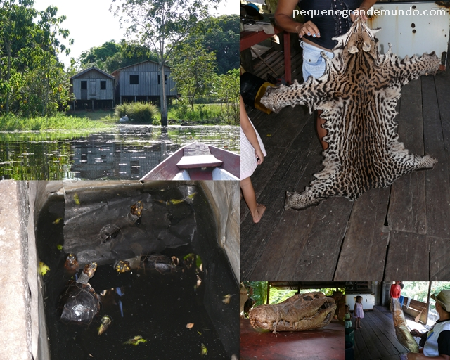 casa de caboclo animais Amazônia