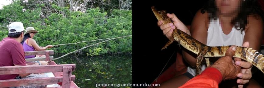 Interação com fauna, observação de jacarés