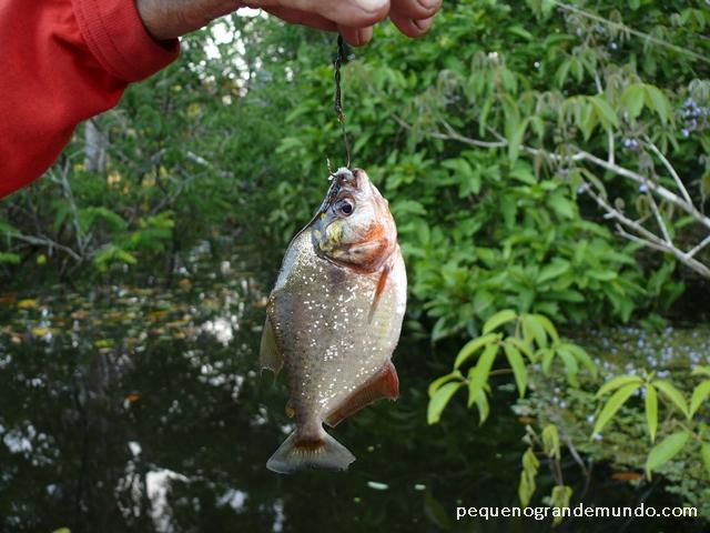 Pesca de piranha