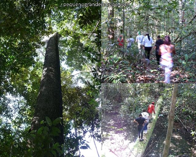 Caminhada na selva Amazônia