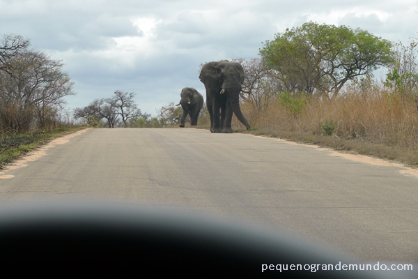 Elefantes Kruger Park