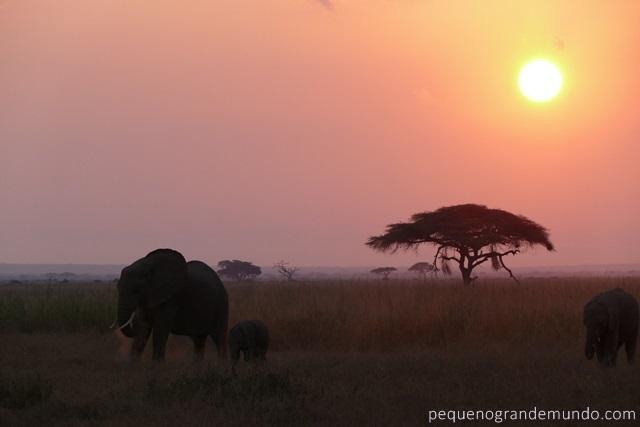 Amboseli elefantes