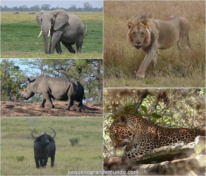 Big Five Quênia